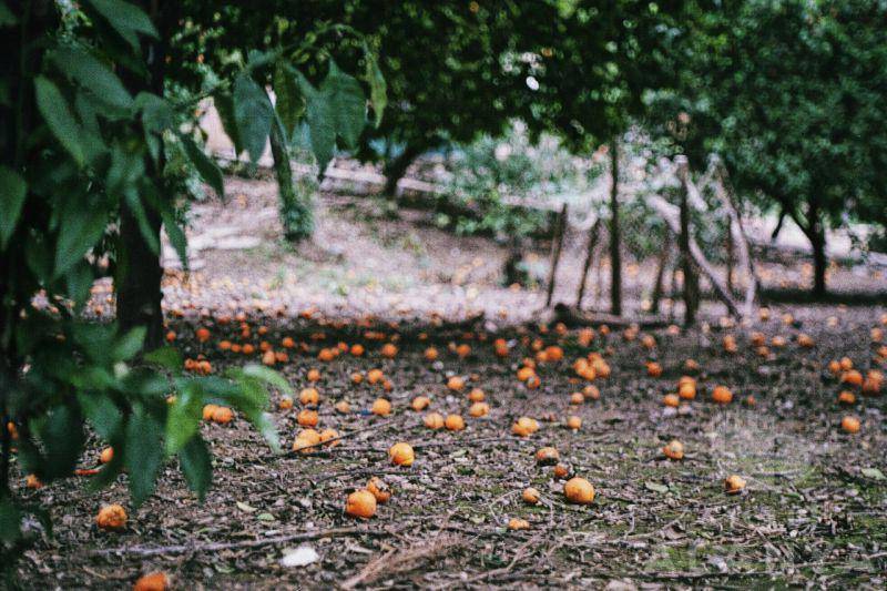 Orange season  -günal, tansu